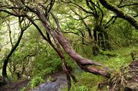 Full Day Birdwatching Tour - West Madeira Island Photos
