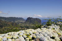Full Day East Madeira - Camacha, Pico do Ariero, Ribeiro Frio, Portela, Santana Photos