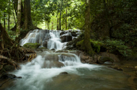 Full-day Krabi Hot Stream and Rainforest Tour  Photos