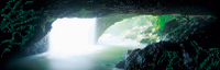 Glow Worm Cave and Natural Bridge Tour from Gold Coast Photos