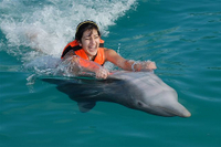 Grand Cayman Dolphin Swim Adventure