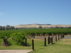 Barossa Valley with Hahndorf Tour from Adelaide Photos