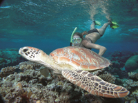 Great Barrier Reef Sailing and Snorkeling Cruise from Port Douglas Photos