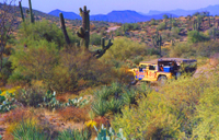 Half-Day Hummer Adventure through Tonto National Forest Photos