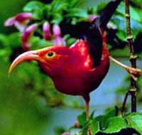 Hawaii Birdwatching Small Group Adventure Tour Photos