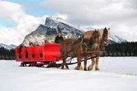 Horse-Drawn Sleigh Ride in Banff Photos