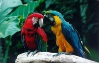 Iguassu Falls Bird Park General Admission Ticket and Tour Photos