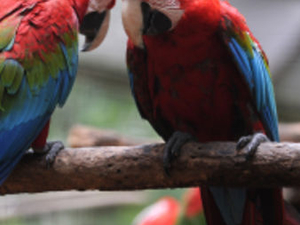 Private Tour: Singapore Jurong Bird Park Tour Photos