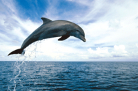Key West Dolphin Watch and Snorkel Cruise Photos