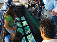 Key West Glass-Bottom Boat Tour with Sunset Option Photos