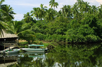 Klias Wetland's River Safari Tour from Kota Kinabalu Photos