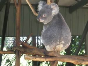 Brisbane Afternoon City Tour Including Lone Pine Koala Sanctuary and Mt Coot-tha Photos