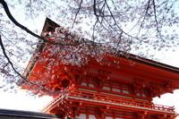 Kyoto Afternoon Tour to Heian Shrine, Sanjusangendo Hall and Kiyomizu Temple from Osaka Photos