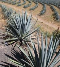 La Noria Blue Agave Mezcal Tour from Mazatlan Photos