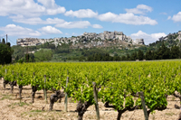 Les Baux de Provence Tour from Avignon: Provencal Wine and Olive Oil Photos