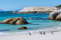 Marine Big 5 Catamaran Safari Adventure from Cape Town Photos