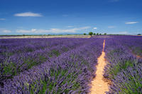 Marseille Shore Excursion: Private Aix-en-Provence and Valensole Lavender Tour Photos