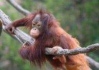 Matang Wildlife Rehabilitation Centre and Kubah National Park Tour from Kuching Photos