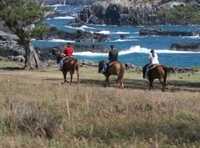 Maui Horseback-Riding Tour with Optional BBQ Lunch Photos