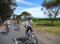 McLaren Vale Wine Tour by Bike Photos