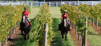Mornington Peninsula Horseback Winery Day Trip from Melbourne Photos
