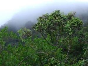 St Lucia Aerial Tram & Rainforest Tour Photos