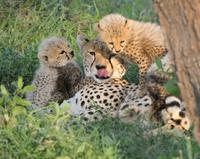 Mpumalanga Super Saver: Moholoholo Wildlife Rehabilitation Center and Cheetah Breeding Project Photos