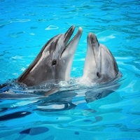 Ocho Rios Dolphin Encounter Program Photos