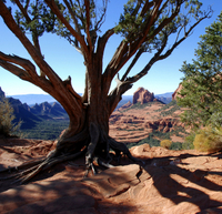 Old Bear Wallow Tour from Sedona Photos