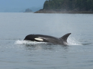 Juneau Whale Watching Adventure and Mendenhall Glacier Tour Photos