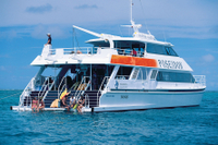Outer Great Barrier Reef Snorkeling and Diving Cruise from Port Douglas Photos
