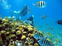 PADI Discover Scuba Diving Course in Cozumel Photos