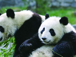 Chengdu Full-Day Tour: Panda Breeding Center and Sanxingdui Museum Photos