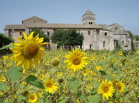 Private Provence Tour: In the Footsteps of Van Gogh Photos