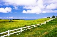Private Tour: Big Island Organic Farms & Merriman Photos