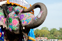 Private Tour: Jaipur Sightseeing Including Jantar Mantar, Amber Fort and Elephant Ride Photos