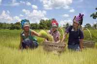 Private Tour: Hill Tribe Villages and Tea Plantation from Chiang Rai Photos