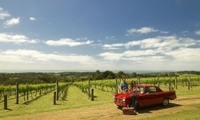 Private Tour: Mornington Peninsula Behind-the-Scenes Gourmet Food and Wine Tasting Experience Photos