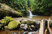 Private Tour: Mindo Nambillo Cloud Forest Reserve from Quito  Photos