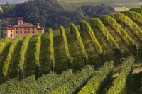 Private Tour: Piedmont Wine Tasting of the Barolo Region Photos