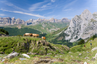 Pyrenees Mountains Private Day Trip from Barcelona Photos