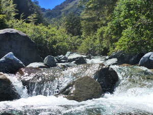 Milford Track Guided Day Walk from Te Anau Photos