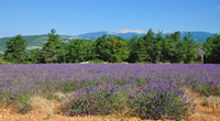 Rhone Valley Wine Tour from Avignon: Chateauneuf-du-Pape, Ventoux and Tavel Photos