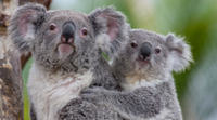 San Diego Round-Trip Theme Park Transfer: San Diego Zoo Photos
