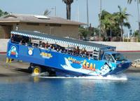 San Diego Shore Excursion: San Diego Seal Tour Photos