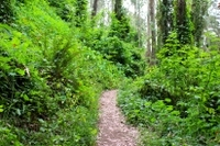 San Francisco Urban Hike: Hills and Hidden Gems Photos