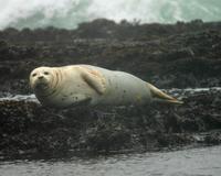 San Francisco Bay Eco-Cruise Photos