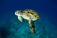 Satang Island Turtle Conservation and Snorkeling Day Trip from Kuching