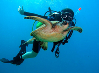 Scuba Diving for Beginners on the Leeward Coast Photos