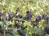 Seattle Shore Excursion: Small-Group Wine-Tasting Tour through Woodinville Photos